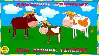 Учим животных: бык, корова и теленок! Развивающие мультфильмы о животных