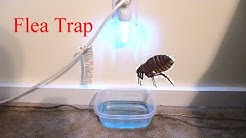 How to Get Rid of Fleas in your Home!