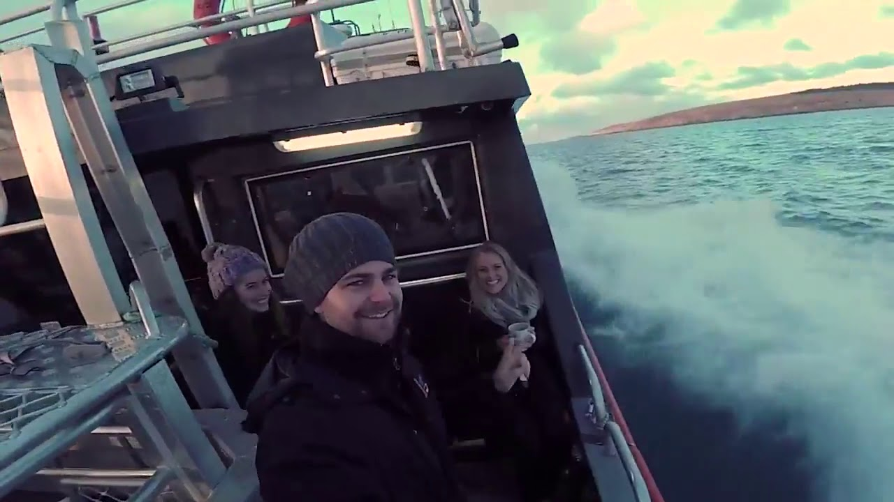 video Swim with Great White Sharks