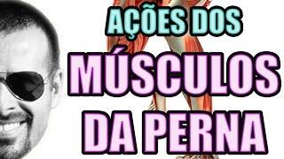 Pernas músculos e ações das suas