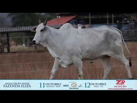 LOTE 249A 1