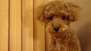 里親募集犬を中心に扱う、全国で多分2軒くらいしかないペットショップ「...