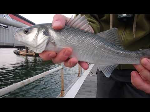 Lrf, Light Rock Fishing UK, Ultralight Lure Fishing For Bass.