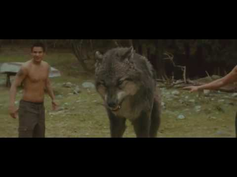 New Moon: Bella Slaps Paul Wolf Transformations H D
