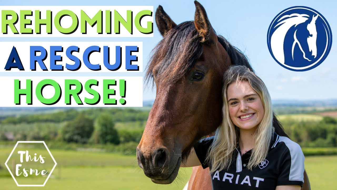 Rehoming a Rescue Horse! World Horse Welfare | AD This Esme