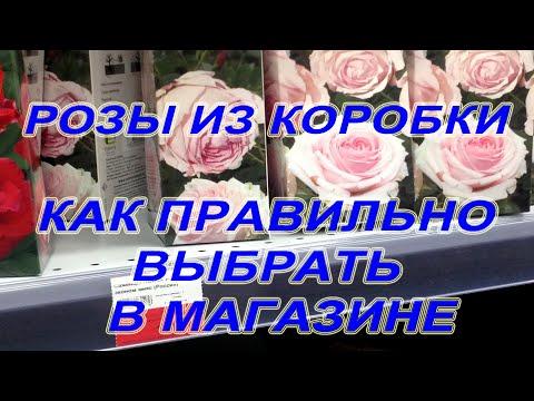 Розы из коробки