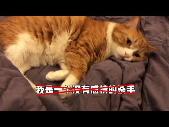 papi酱 - 小咪:今天是一只有心事的小猫咪...【papi家的大小咪】
