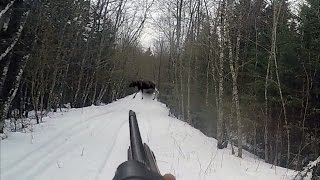 Охота #24 загонная охота на кабана