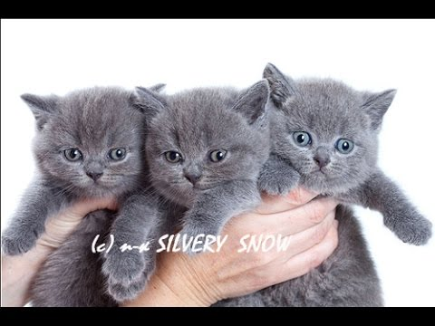 Клички кошек