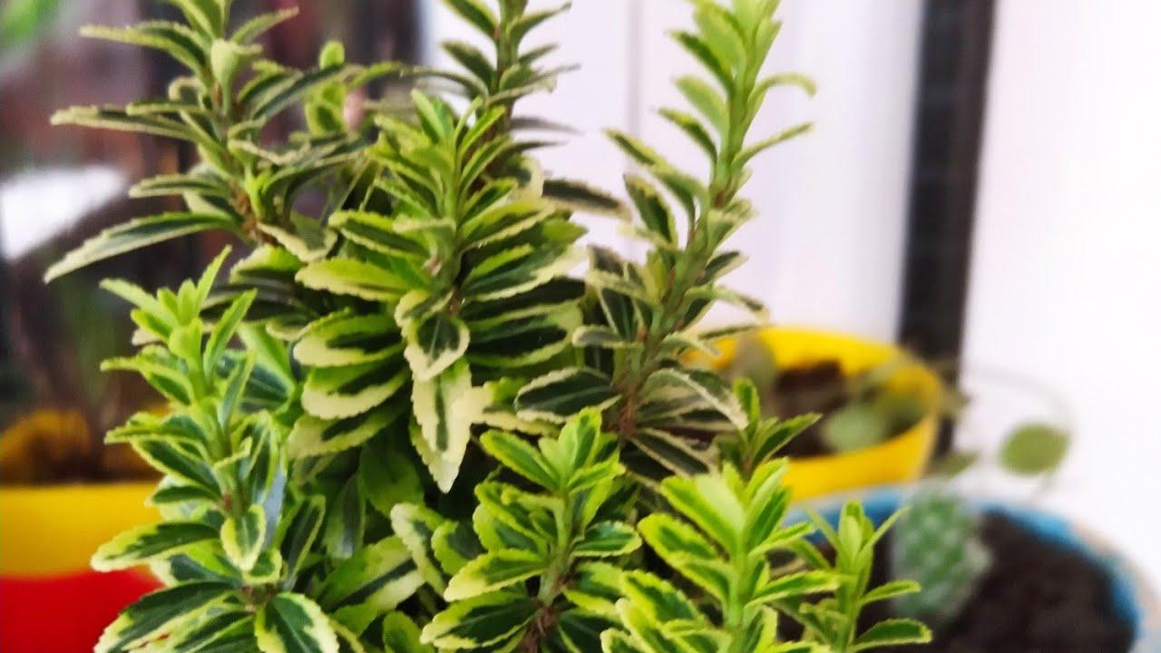 Save ur Succulents during summer/ Monsoon| Garmi mei Succulents ko kaise bachaye| Succulent care