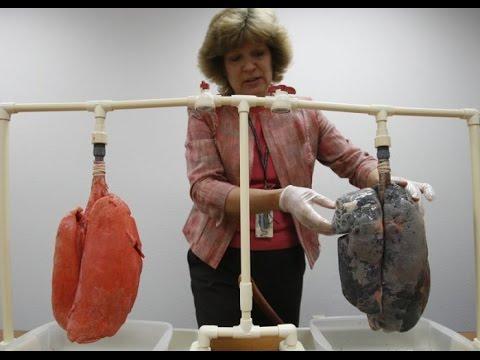 Вред курения на органы дыхания