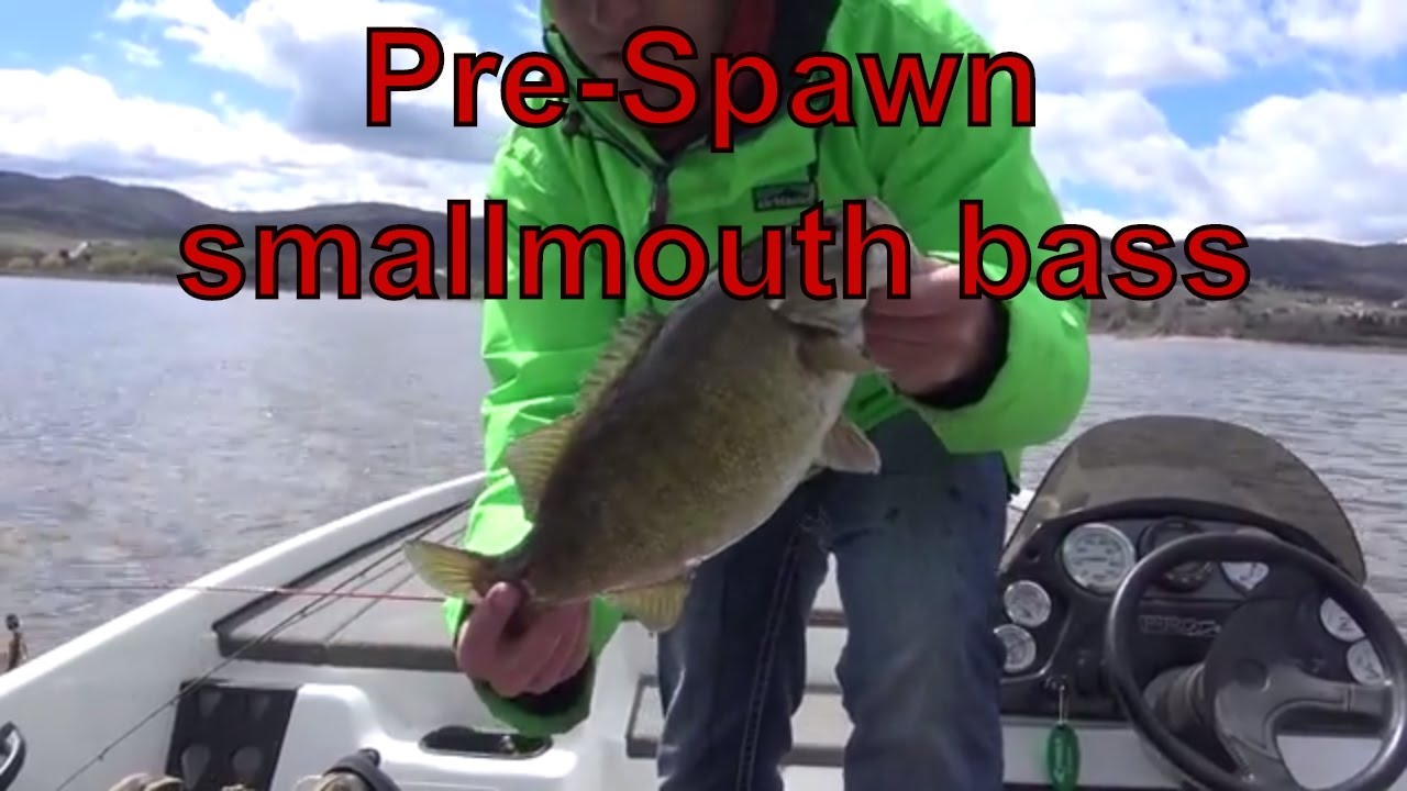 Pre spawn spring bass fishing in utah youtube for Northern utah fishing report