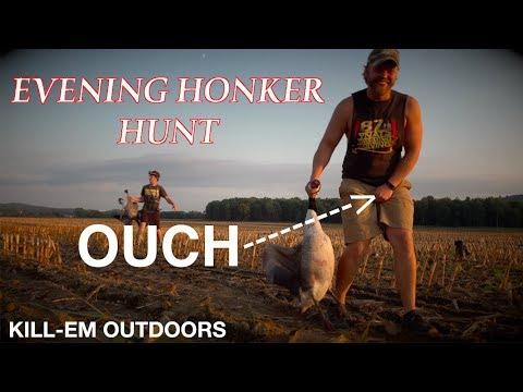 Evening Honker Hunt In New York