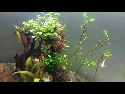 Aquascaping for Beginners: Substrate and Hardscape (Day 2)