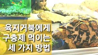 육지거북에게 구충제 먹이는 세 가지 방법 / Three…