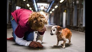 18 Year Old Blind Dog Meets Her First Person At The Shelter And Refuses To Let Go