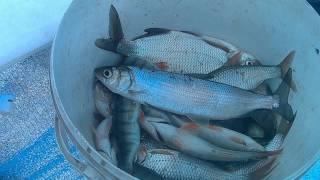 Рибалка в Хакасії 2017. 23-24 березня. К. В. Х.