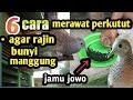 Tips Rawatan Harian Perkutut Agar Rajin Bunyi Manggung  Mp3 - Mp4 Download
