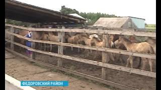 В фермерском хозяйстве Фёдоровского района уже 11 лет делают натуральный кумыс