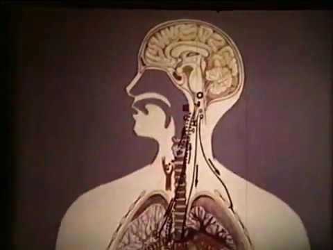 Причины острой дыхательной недостаточности © Acute respiratory failure