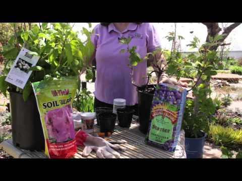 How to Grow White Hydrangeas : Grow Guru