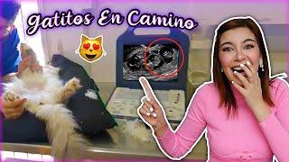 GATITOS EN CAMINO!! JULIETA ESTÁ EMBARAZADA - Lulu99