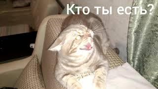Кот говорит отойди (1 серия)