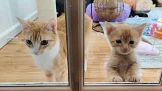 Fiveyear Old Kittens Defy Aging, Science. 20210420