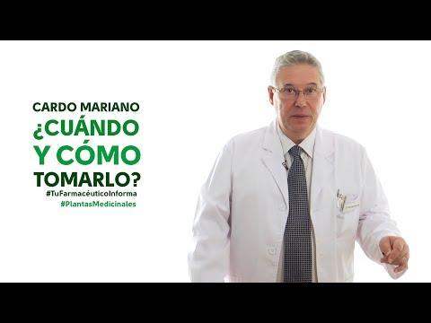Cardo Mariano, Cuándo Y Cómo Tomarlo - #TuFarmacéuticoInforma