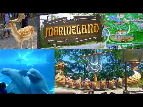 Tips for visiting Marineland in Niagara Falls