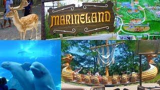 Tips for visiting Marineland in Niagara Falls