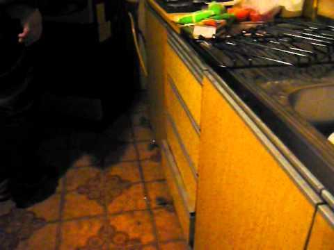 Como atrapar un raton en tu casa youtube - Como atrapar ratones ...