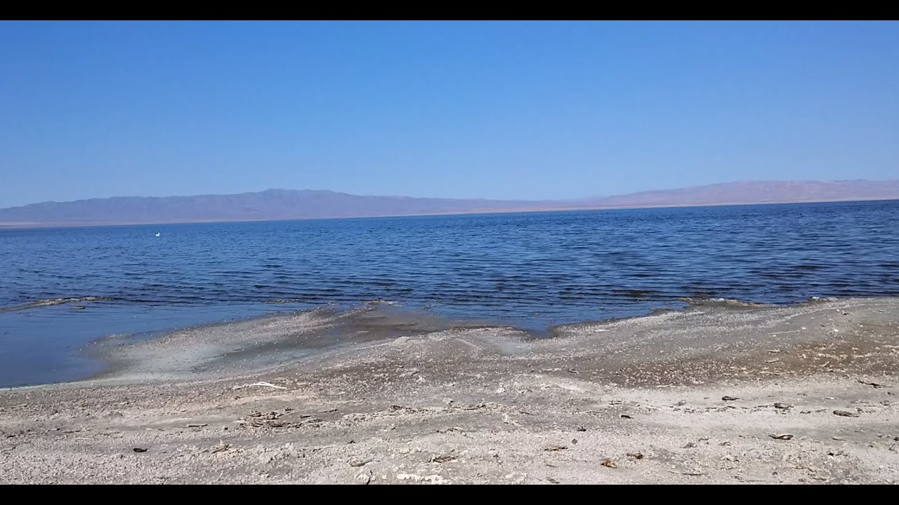 The salton sea california thousands of dead fish youtube for Salton sea fishing report