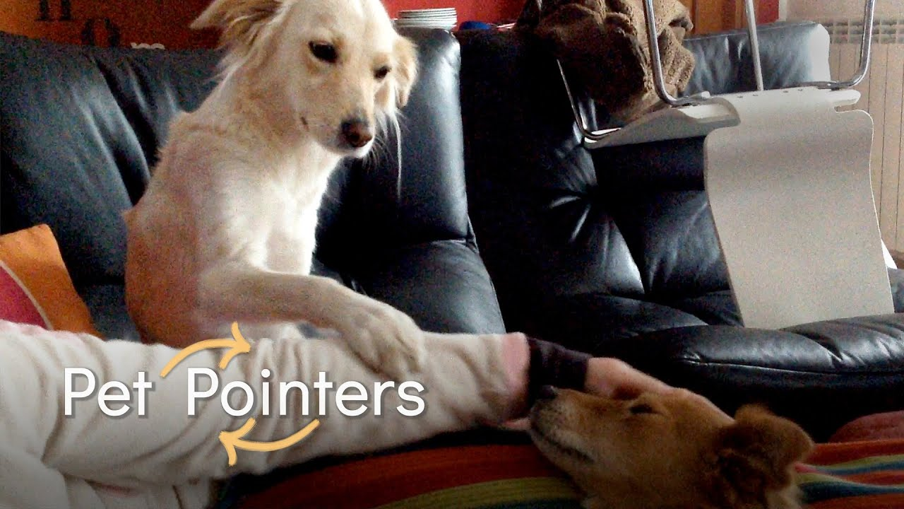 How To Reduce Your Pet's Jealousy   Pet Pointers