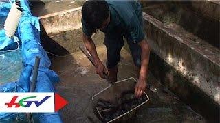 HGTV   Làm giàu từ nuôi cá chạch lấu