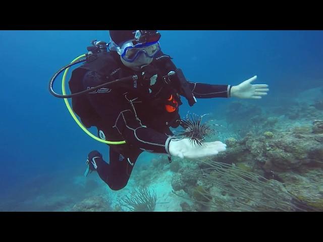Dangerous Lionfish Taming in  Aruba June 2018! See it now!