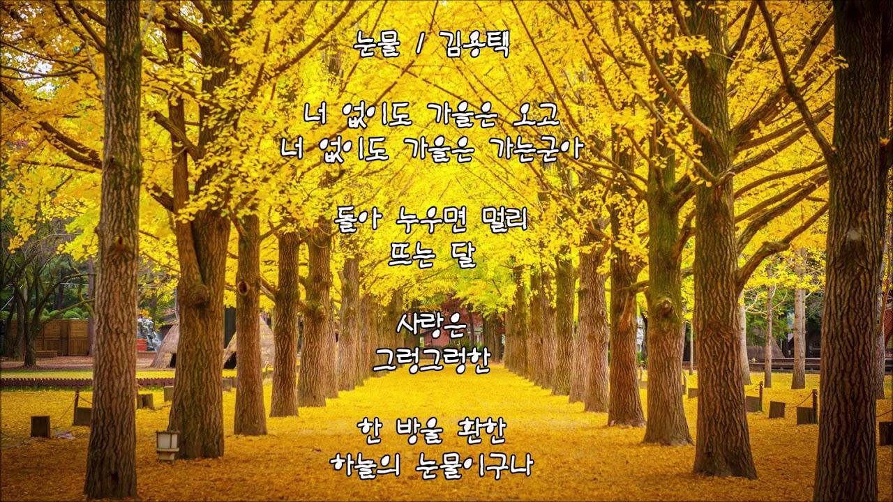 양현경 - 꿈길