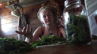 How to make a Lemon Balm elixir!