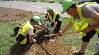 видео Как самостоятельно вырастить вересковый сад на загородном участке