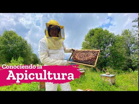 La apicultura, la reproducción y manejo de colmenas de abejas para miel en Zitacuaro Michoacán
