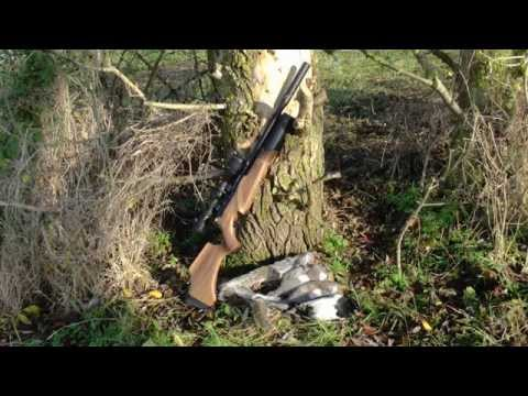 Pest Control with Air Rifles - Squirrel Shooting - The New Permission
