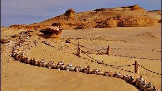 Un hombre no podía creer lo que veía cuando encontró esto en el desierto