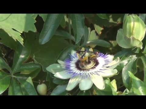 [Vlog] Fleur, Foursquare, Easter Egg ;-)