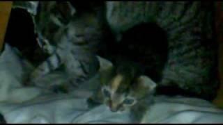 Котята и кошка.mp4