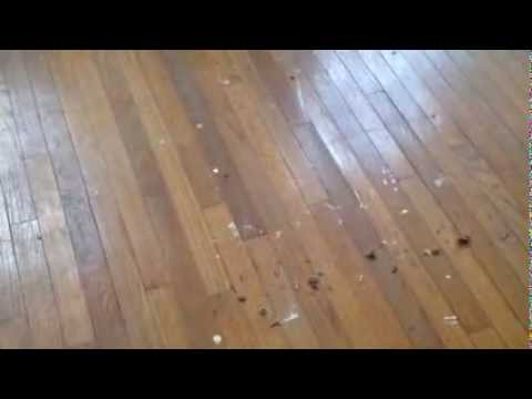 What to do if you have hardwood floors under your carpet for Wood floor under carpet