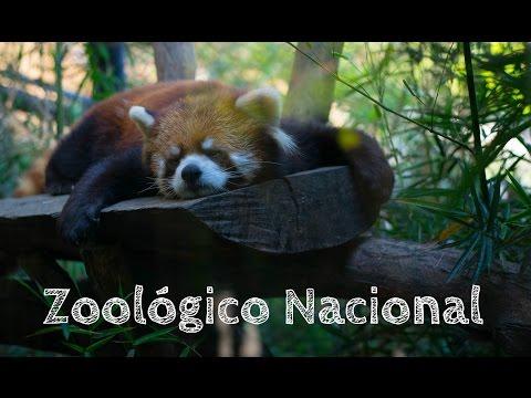 Bit logs : Zoologico Metropolitano Santiago