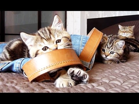 Thumbnail for Cat Video Kittens Use Jeans As a Toy