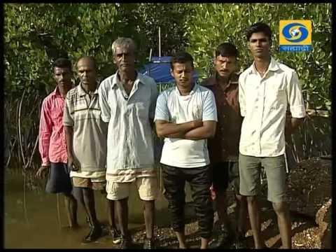 'Protection of Mangroves Through Crab Culture' _ 'खेकडा संवर्धनाद्वारे कांदळवन संरक्षण'