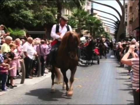 Los caballos toman el protagonismo en la Feria de Mayo de Torrevieja