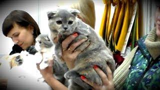 Лучший КОТЕНОК - Конкурс Выставка Кошек | ПОРОДЫ КОШЕК